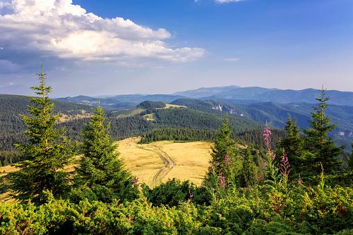 樹木「トランシルバニアの Apuseni 山脈のパッドで風景を見る」:スマホ壁紙(16)