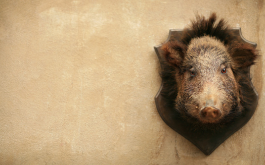 焦点「Wild boar on a wall in Volterra, Tuscany Italy」:スマホ壁紙(1)