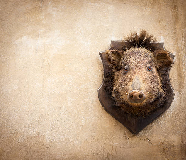 Wild boar on a wall in Volterra, Tuscany Italy:スマホ壁紙(壁紙.com)
