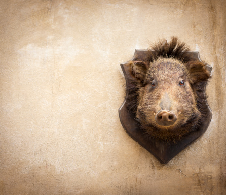 人物「Wild boar on a wall in Volterra, Tuscany Italy」:スマホ壁紙(18)