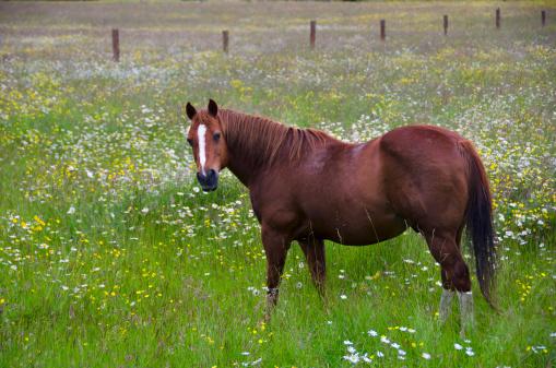 Bay Horse「Farm horse in flower fields」:スマホ壁紙(19)