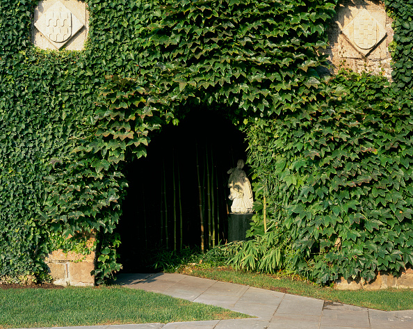 Footpath「View of a wall covered of creepers」:写真・画像(14)[壁紙.com]