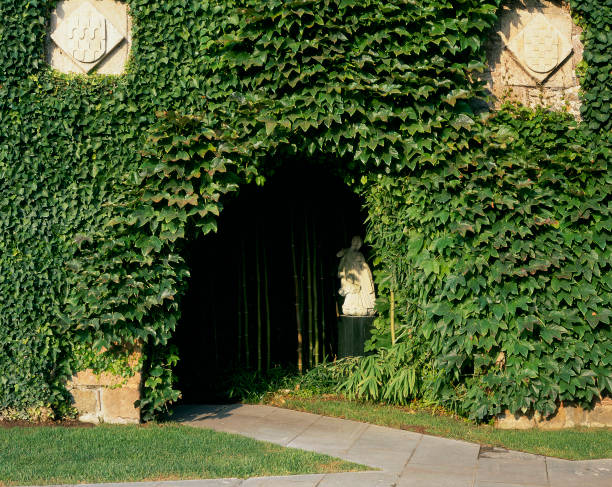 View of a wall covered of creepers:ニュース(壁紙.com)
