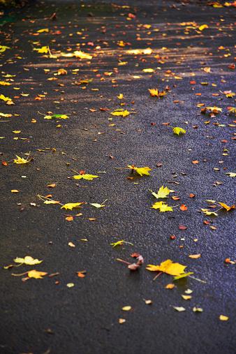 セイヨウカジカエデ「Mixed fallen autumn leaves on the road」:スマホ壁紙(13)
