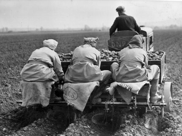 Sowing「Potato Planting」:写真・画像(6)[壁紙.com]