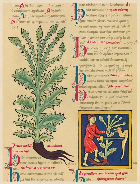 Manuscript「Verbena Or Vervain」:写真・画像(12)[壁紙.com]