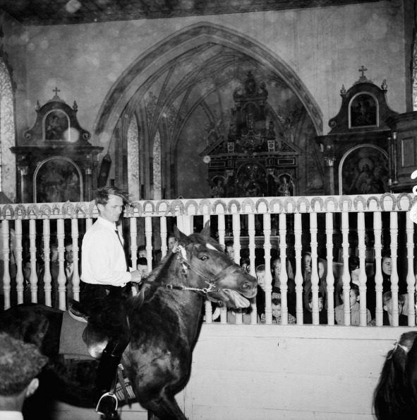 One Animal「Horse In Church」:写真・画像(4)[壁紙.com]