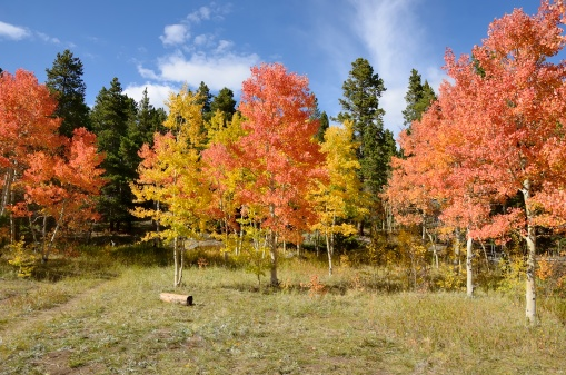 Arapaho National Forest「Colorado Aspens in Autumn」:スマホ壁紙(7)