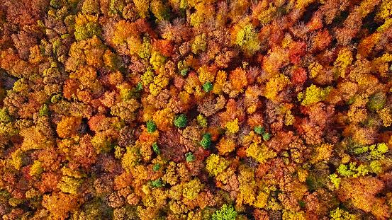 秋「上から直接作られたオーバーヘッド秋の森の空中背景」:スマホ壁紙(19)