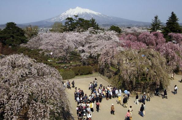 Blossom「Crowds Attend The Hirosaki Cherry Blossom Festival」:写真・画像(9)[壁紙.com]