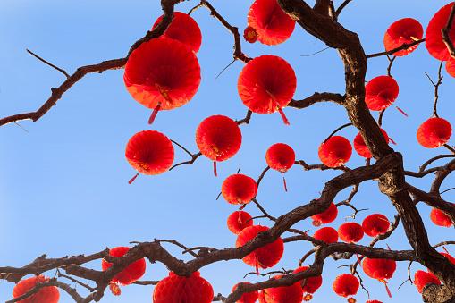 Chinese Lantern「Beijing ditan red lanterns」:スマホ壁紙(2)
