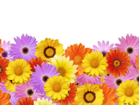 Focus On Background「Spring daisy flower frame / border」:スマホ壁紙(1)