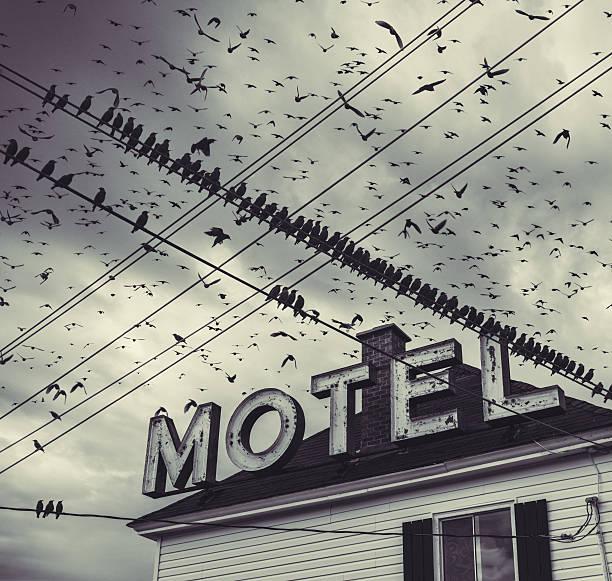 The Bird Motel:スマホ壁紙(壁紙.com)