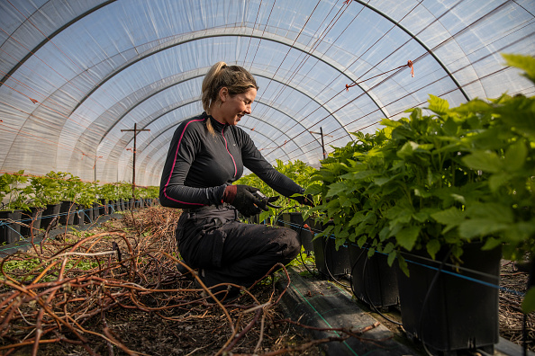 Season「Coronavirus Travel Restrictions Pose Risk To Seasonal Farm Labour」:写真・画像(6)[壁紙.com]