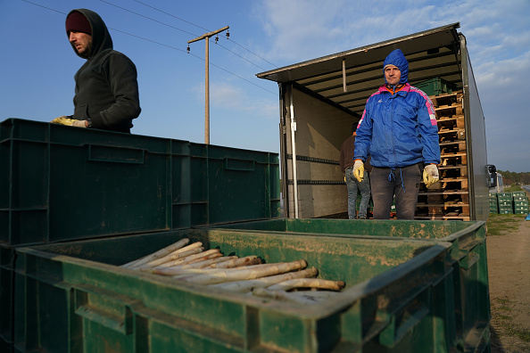 Asparagus「Farmers, Dependent On Foreign Workers, Face Uncertainty During Coronavirus Crisis」:写真・画像(14)[壁紙.com]