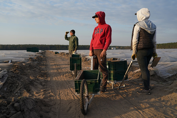 Asparagus「Farmers, Dependent On Foreign Workers, Face Uncertainty During Coronavirus Crisis」:写真・画像(2)[壁紙.com]