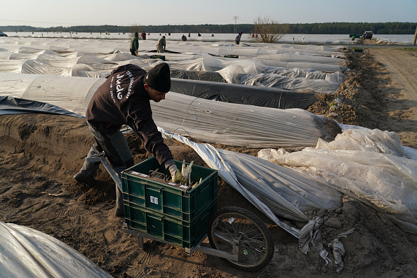 Asparagus「Farmers, Dependent On Foreign Workers, Face Uncertainty During Coronavirus Crisis」:写真・画像(17)[壁紙.com]
