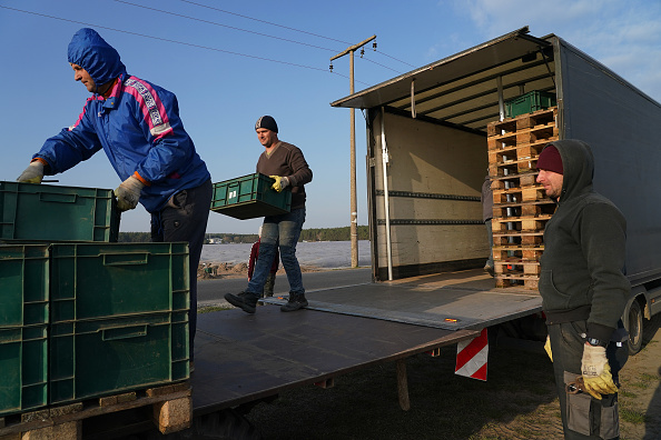 Asparagus「Farmers, Dependent On Foreign Workers, Face Uncertainty During Coronavirus Crisis」:写真・画像(6)[壁紙.com]
