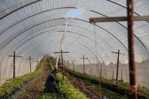 Season「Coronavirus Travel Restrictions Pose Risk To Seasonal Farm Labour」:写真・画像(4)[壁紙.com]