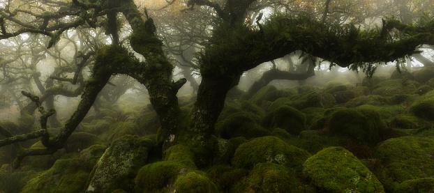 Horror「Ancient oak forest in the mist.」:スマホ壁紙(7)