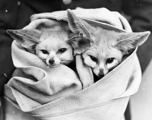 動物「All Wrapped Up」:写真・画像(9)[壁紙.com]