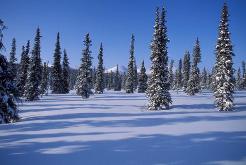 アラスカ「Alaskan winter landscape.」:スマホ壁紙(14)