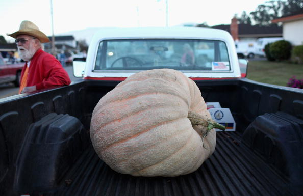 Gourd「Mighty Gourds On View At Annual World Championship Pumpkin Weigh-Off」:写真・画像(10)[壁紙.com]