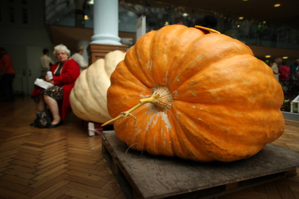 Event「The Finest Fruit and Vegetables On Display At The RHS Harvest Festival Show」:写真・画像(15)[壁紙.com]