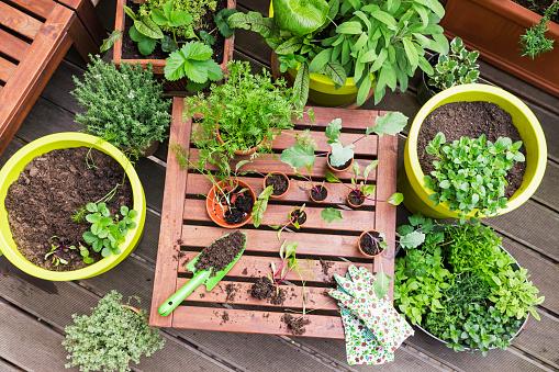 Radish「Assorted potted plants and gardening tools on balcony」:スマホ壁紙(12)