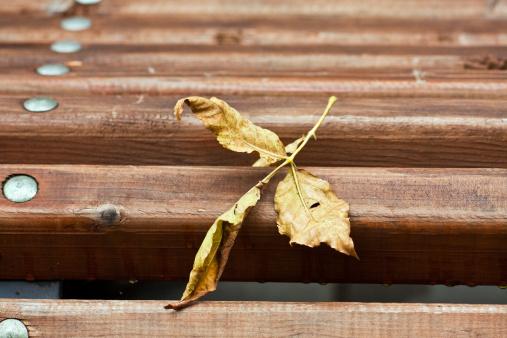 Obsolete「Yellow leaf on a bench」:スマホ壁紙(18)