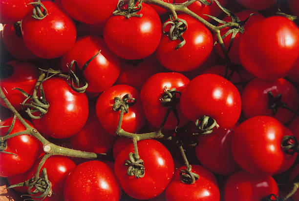 Ripe Tomatoes:スマホ壁紙(壁紙.com)