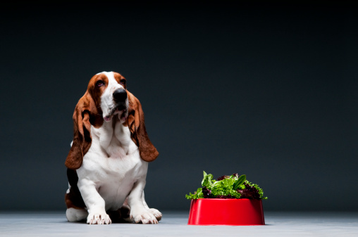 Eating「Bassett hound sat next to red bowl of lettuce.」:スマホ壁紙(13)