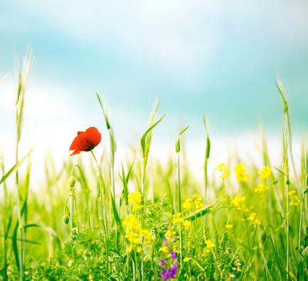 花畑「春の花」:スマホ壁紙(5)