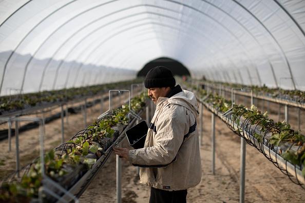 Season「Coronavirus Travel Restrictions Pose Risk To Seasonal Farm Labour」:写真・画像(1)[壁紙.com]