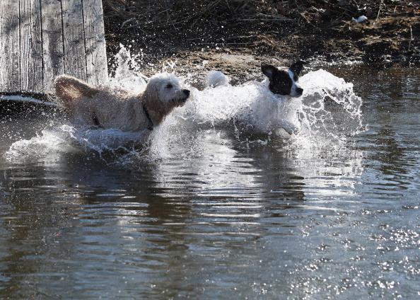 Bruce Bennett「Dogs at Play」:写真・画像(18)[壁紙.com]