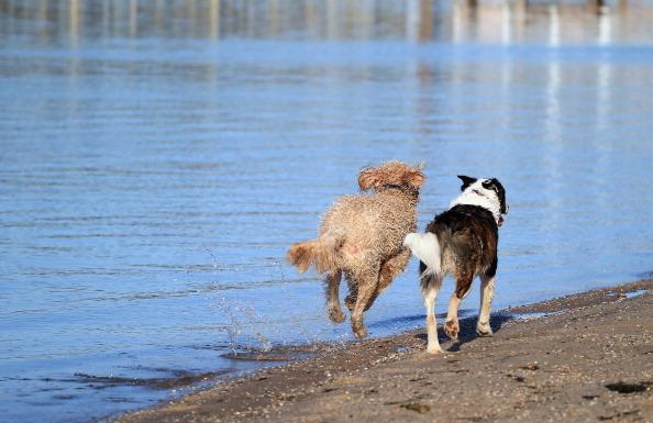 Bruce Bennett「Dogs at Play」:写真・画像(19)[壁紙.com]
