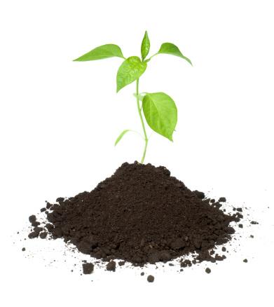 Planting「Plant」:スマホ壁紙(6)