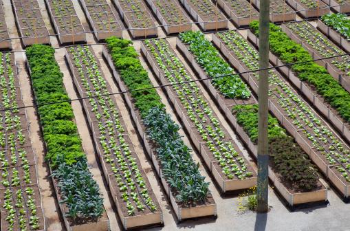 Garden Center「Urban organic vegetable garden」:スマホ壁紙(17)