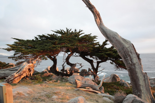 Big Sur「Pescadero Point at 17 Mile Drive in California」:スマホ壁紙(14)
