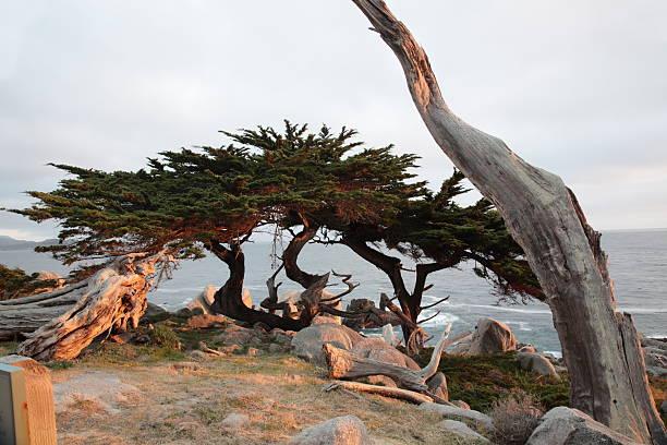 Pescadero Point at 17 Mile Drive in California:スマホ壁紙(壁紙.com)