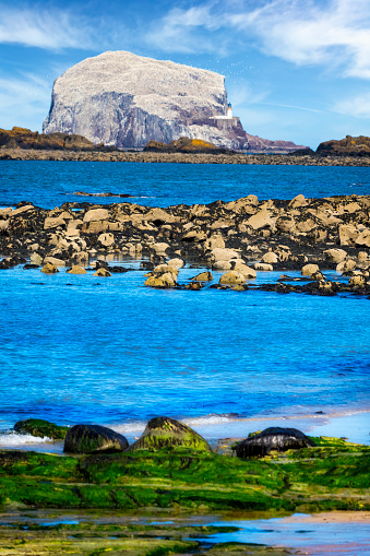 East Lothian「Bass Rock, Colony of gannets, North Berwick, Scotland,UK」:スマホ壁紙(14)