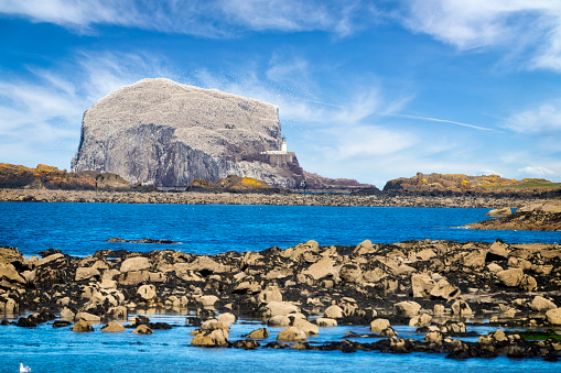 East Lothian「Bass Rock, Colony of gannets, North Berwick, Scotland,UK」:スマホ壁紙(5)