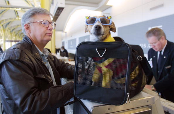 動物「F Andy Messing Jr Checks In At An Airline Counter With His Pet Dick The Dog For A Fli」:写真・画像(2)[壁紙.com]