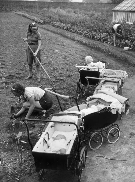 Sowing「Planting Cabbages」:写真・画像(5)[壁紙.com]