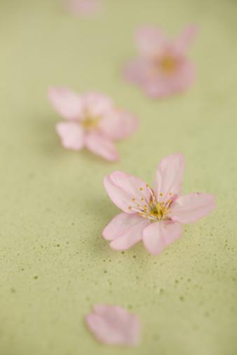 Blossom「Green tea ice cream with cherry blossom 」:スマホ壁紙(10)