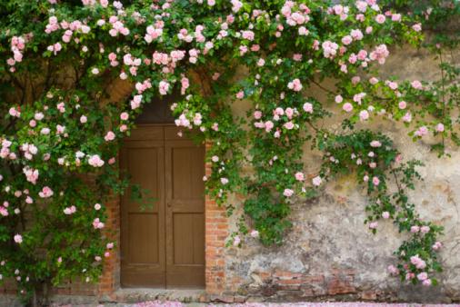 Vine - Plant「Doorway covered with pink rose flowers」:スマホ壁紙(4)