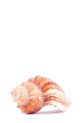 Sailor「One side of a shellfish」:スマホ壁紙(14)