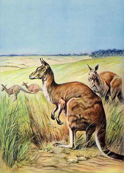 Painting - Activity「Kangaroo」:写真・画像(6)[壁紙.com]