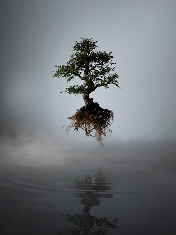 Hope - Concept「Floating tree above lake in mist」:スマホ壁紙(14)