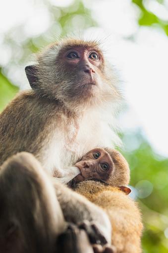 Ao Phra Nang Beach「Monkey mother and baby at Railay Beach, Krabi, Thailand」:スマホ壁紙(3)